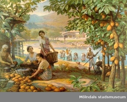 :1: Ananas.:2: Apelsin och citron.:3: Banan.:4: Bomull.:5: Dadelpalm.:6: Fikon.:7: Kaffe.:8: Kakao.:9: Kokospalm.:10: Majs.:11: Ris.:12: Sockerrör.:13: Te.:14: Vinranka.