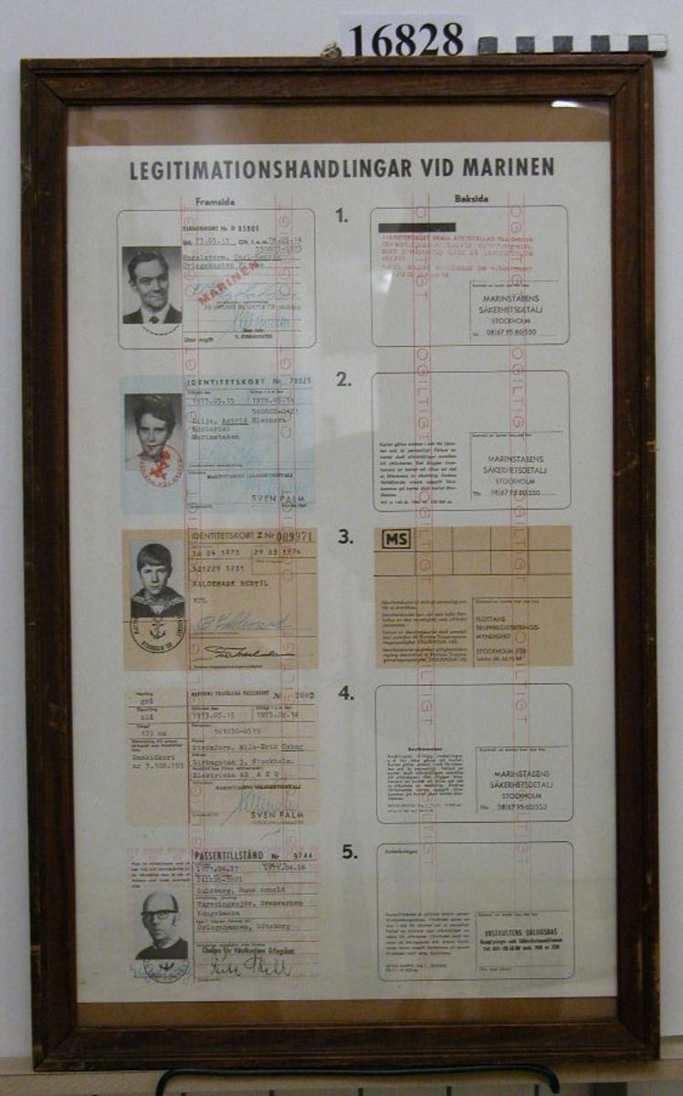 """Papper inom glas och ram, som visar fem exempel på legitimationshandlingar vid marinen, både fram och baksida. Från ovan: tjänstekort, identitetskort z (för värnpliktiga), tillfälligt passerkort och passertillstånd. Samtliga visar verkliga personer, """"ogiltigt"""" är stämplat  i band över alla. Daterade med början 1973. Ram av brunbetsat trä, profilerad 25 mm bred, överst på kanten mässingsplatta med text """"MS - 69"""". Baksida klädd med papp. Neg.nr A63 4:3A-4A"""