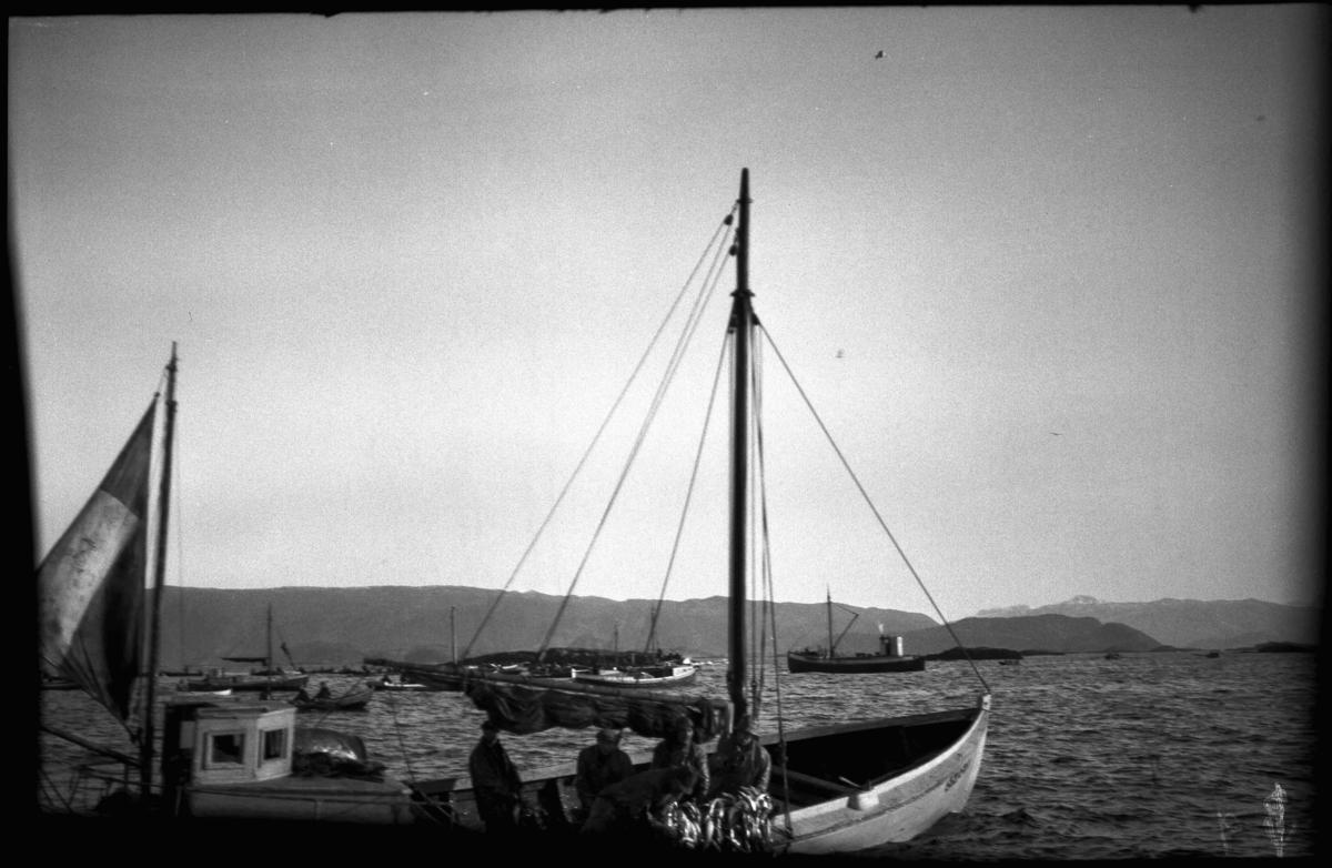 Vintersildfiske med drivgarn i Frøysjøen, Bremanger