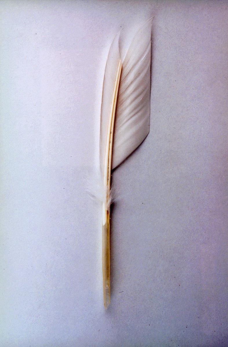 Fjærpenn