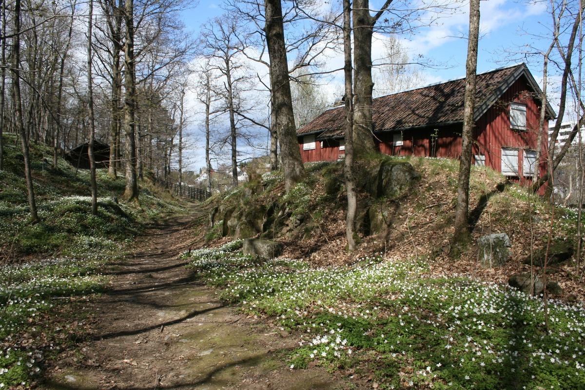 Langsæheia med Bråtenhuset. Hvitveis og eiketrær.
