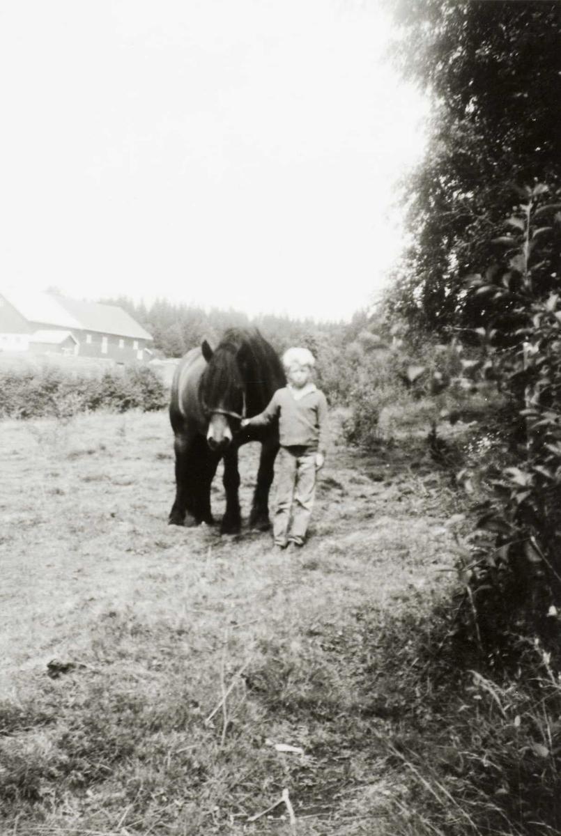 Stor hest og liten kjørekar