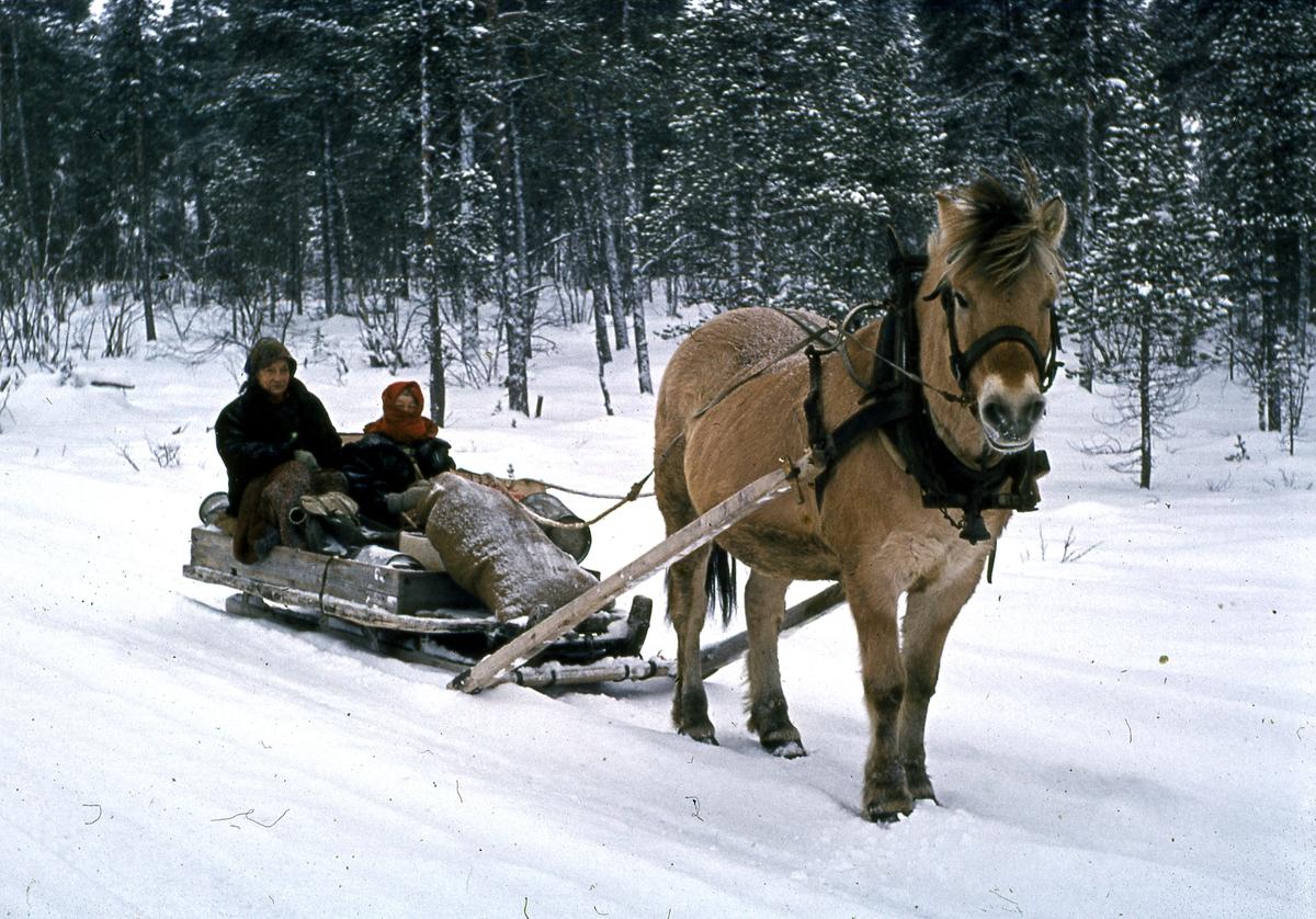 Kjøring med hest