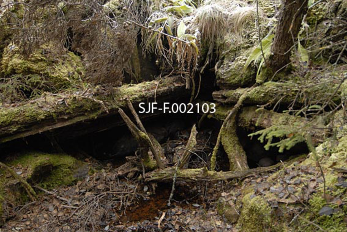 Fra den nordøstre bredden av det lille vassdraget Anda (uttales Ana) på Storsjøens østside i Ytre Rendalen.  Fotografiet er tatt øverst i Sagfallet, hvor Andrågardene hadde ei oppgangssag.  Høsten 1963 ble denne saga, i sterkt forfallen tilstand, demontert og flyttet til daværende Norsk Skogbruksmuseum i Elverum.  Saga lå ved åas sørvestre bredd.  Dette fotografiet viser en inngravning i terrenget på motsatt side av elva, hvor det er grunn til å tro at det har stått et kvernhus.  Rester av et laftet hjørne ble påvist i skyggepartiet som framstår som svart under granleggen øverst på bildet.
