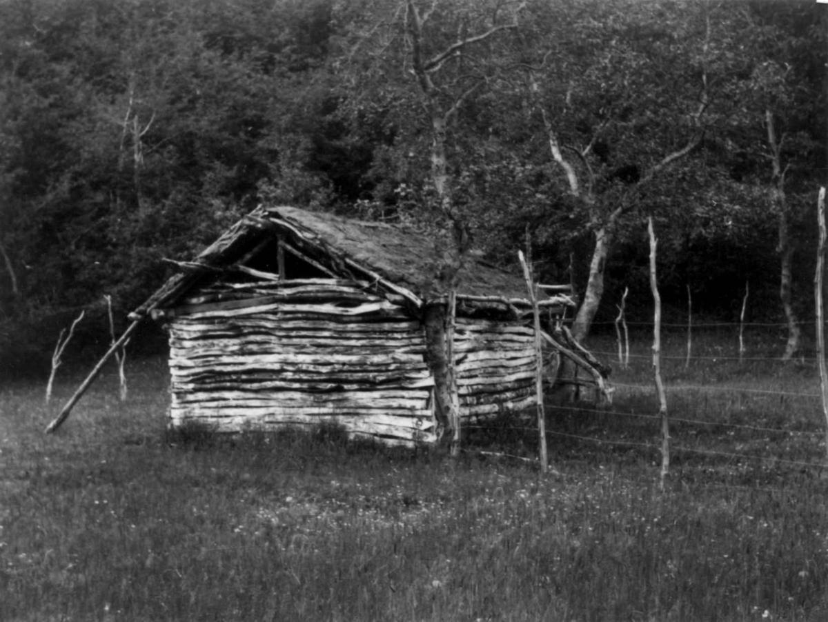Høyskjå, uthus, bygget mellom to trær, Birtavarre, 1948